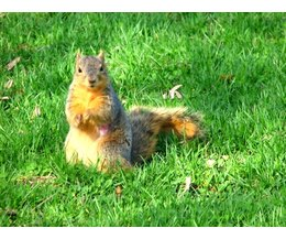 What Is A Good Squirrel Repellent With Pictures Ehow