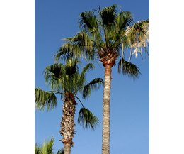 How To Identify The Names Of Florida Palm Trees Ehow