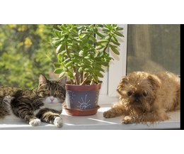 indoor plants that are safe for cats with pictures ehow. Black Bedroom Furniture Sets. Home Design Ideas