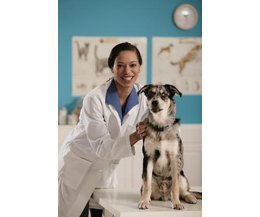 What Is The Meaning Of Dhlpp Vaccine For Dogs Ehow