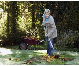 will leaves left on the lawn over the winter kill the