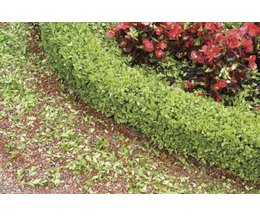 Landscaping ideas for small budgets with pictures ehow for Low bushes for landscaping