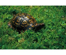 Water Plants For Turtles : Turtles like to eat fish, frogs, salamanders, newts and snails, making ...