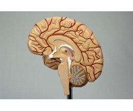 Vitamin d helps brain fog photo 9