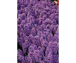 The perfect color match for lilac with pictures ehow - What colour goes with lilac ...