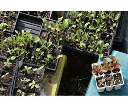 Why Coffee Grounds Are Good For A Vegetable Garden Ehow