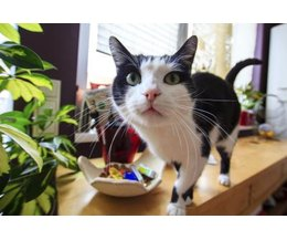 Indoor Plants That Are Safe For Cats With Pictures EHow