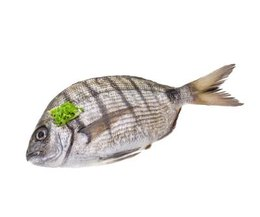 How to raise tilapia at home to eat with pictures ehow for What do tilapia fish eat