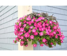 how to pick flowers for hanging baskets ehow. Black Bedroom Furniture Sets. Home Design Ideas