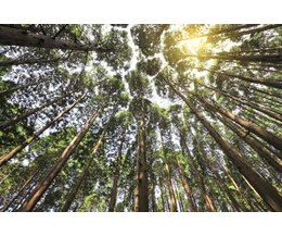 Spiritual Meaning Of The Cedar Tree With Pictures Ehow