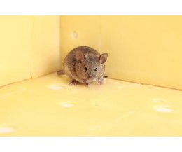 What Foods Can Kill Mice With Pictures Ehow
