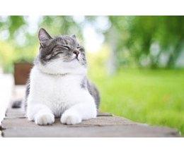 Cat Pooping Problemsthumbnail