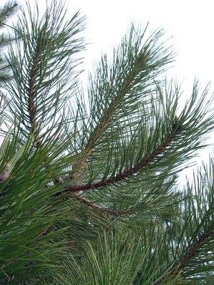 How to Start a Christmas Tree Farm & Its Tax Implications ...