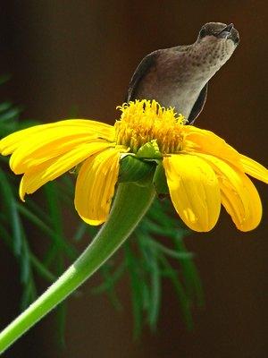 Rainforest Hummingbird Facts