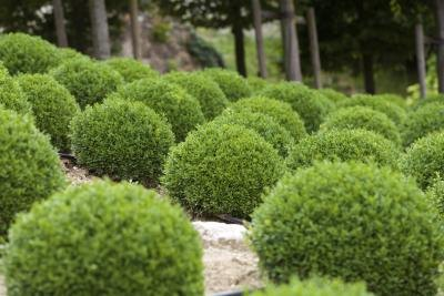 Shade loving evergreen shrubs in zone 7 ehow for Low maintenance bushes for shade