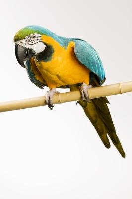 How to Make a Homemade Macaw Cage