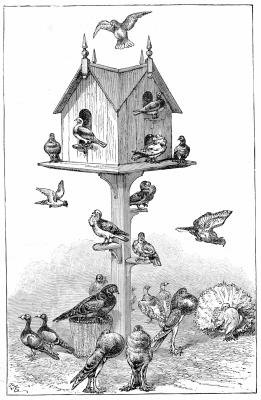 How to Attach a Birdhouse to a T-Post