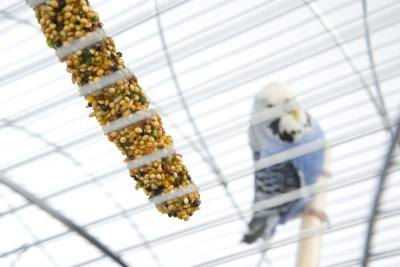 How to Build a Budgie Flight Cage
