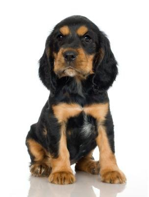 All About Dogs: Dog Breeds With Oily SkinOily Seborrhea In Dogs