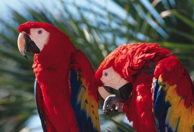 How to Make Your Own Macaw Toys