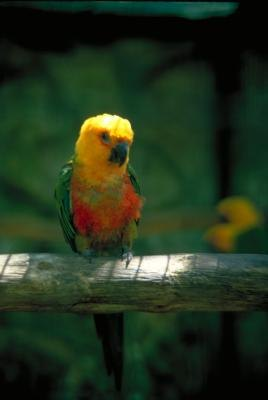 What Kinds of Music Soothe Birds?