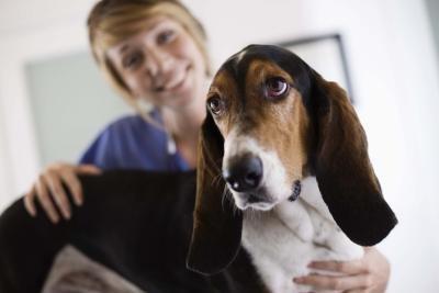 How to Order Iams Kangaroo & Oat Prescription Dog Food