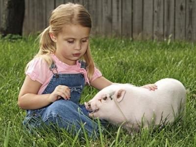 little girl sitting on grass with her pig(Jon Schulte/iStock/Getty ...