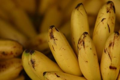 Do Bananas Harm Birds?
