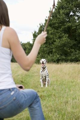 Are Dalmatians Safe With Children?