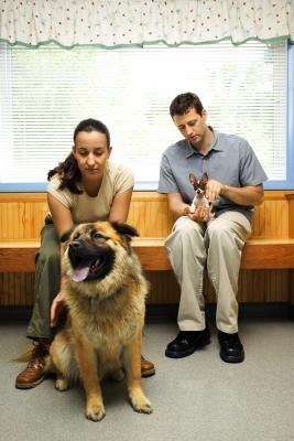 Dog Breeds That Will Affect Your Homeowners Insurance