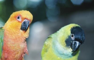 How to Make a Parakeet Incubator