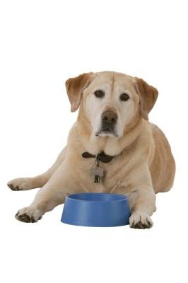 How to Keep Biofilm Out of a Dog's Water