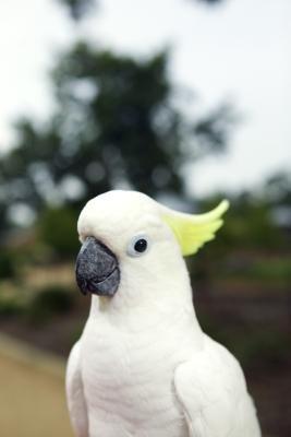 How to Make a Cockatoo Stand
