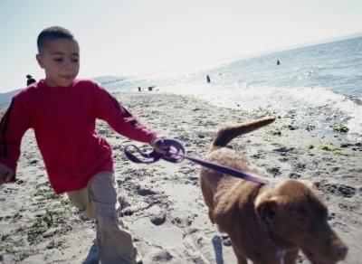 10 Most Popular Medium Size Dog Breeds