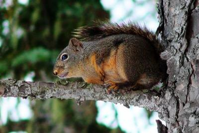 How to Stop Squirrels From Stealing Your Bird Food