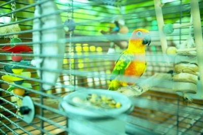 The Best Way to Arrange Perches in a Parakeet Cage