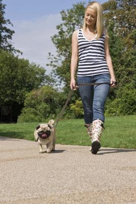 What Types of Dogs Have Tails That Curl Up When Standing?