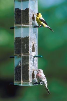 How to Attract Goldfinches to a Finch Sock Feeder