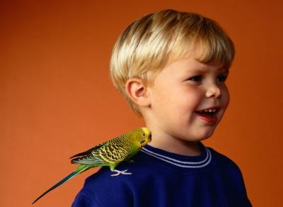 Cockatiels vs. Parakeets as Children's Pets