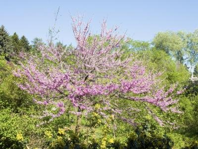 Listing of Plants & Trees Native to Oklahoma (with ...