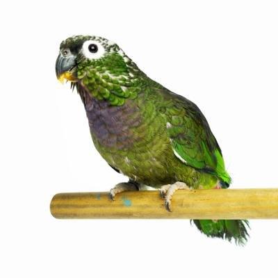 Homemade Parrot Perch
