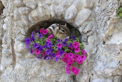 How To Deter Chipmunks From Eating Flowers With Pictures Ehow