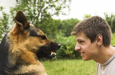 german shepherd dog attack statistics