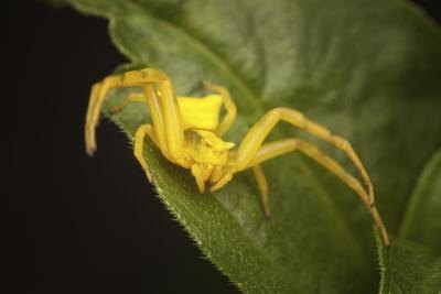 Common Indiana Spider Species With Pictures Ehow