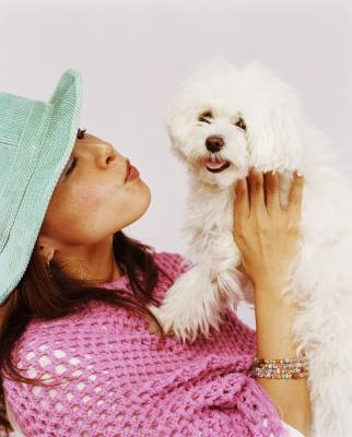 What Are the Behaviors of Maltipoo Puppies?