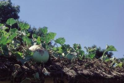 how to grow a vegetable garden in florida