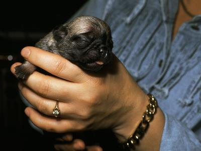 Nutritional Milk for Newborn Puppies