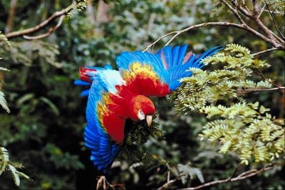 What Does It Mean When Parrots Squawk?