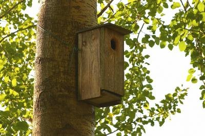 How to Build a Yellow Canary Bird House