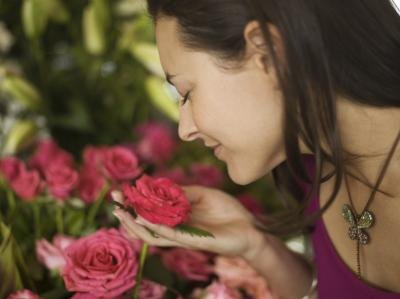 Medicinal Value of Rose Plants